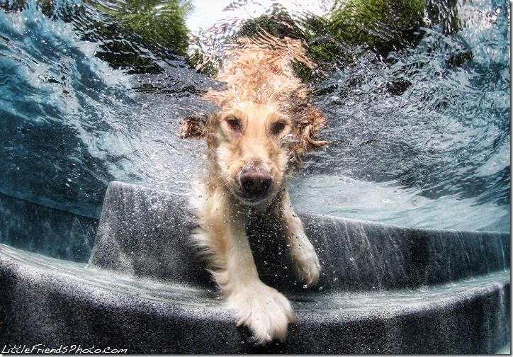 Underwater-Dog-Photography (12)