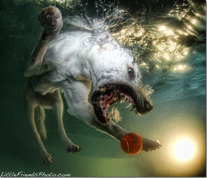 Underwater-Dog-Photography (13)