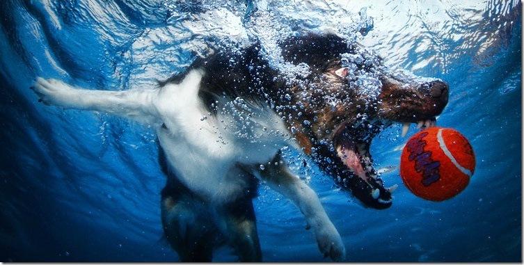 Underwater-Dog-Photography (16)