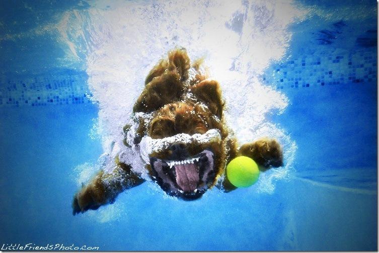 Underwater-Dog-Photography (18)