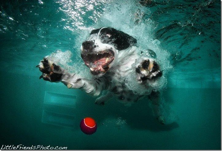 Underwater-Dog-Photography (2)