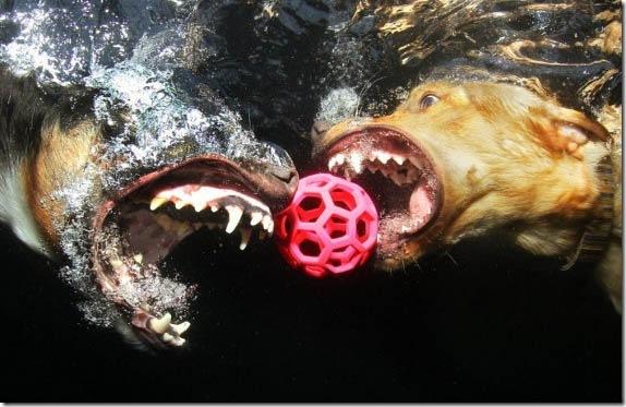 Underwater-Dog-Photography (3)
