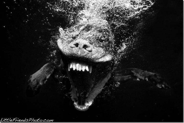 Underwater-Dog-Photography (32)