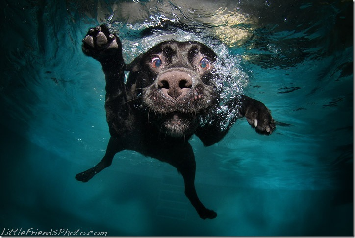 Underwater-Dog-Photography (34)
