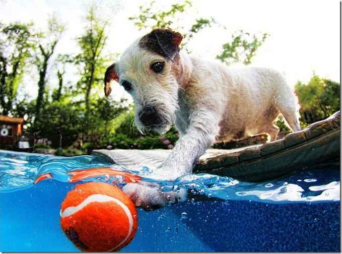 Underwater-Dog-Photography (4)