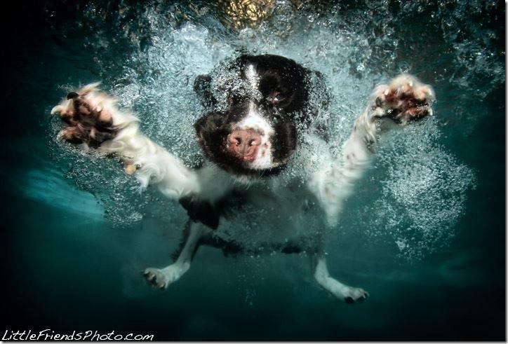 Underwater-Dog-Photography (5)