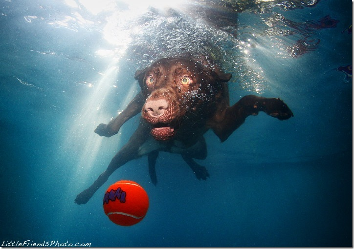 Underwater-Dog-Photography (6)