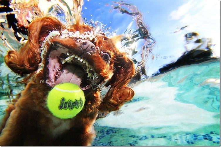 Underwater-Dog-Photography (8)