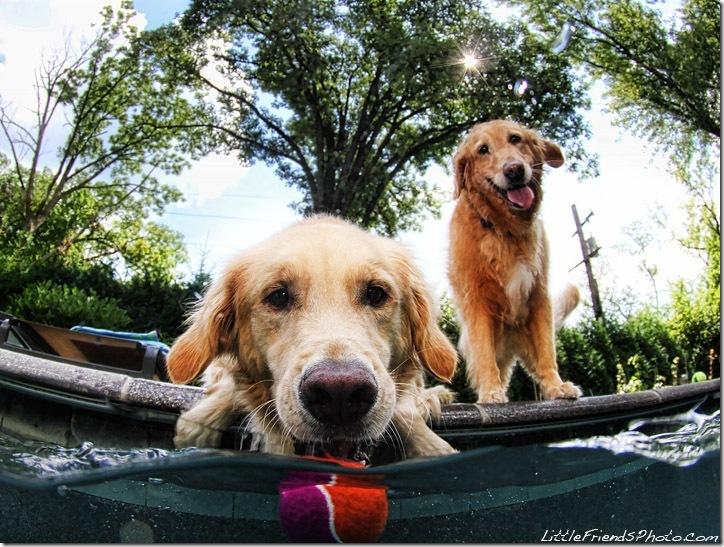 Underwater-Dog-Photography (9)