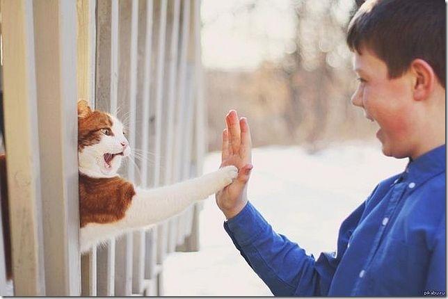 動物と人間おもしろ (20)
