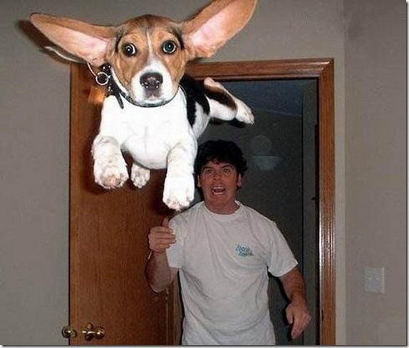 空飛ぶ犬 (13)