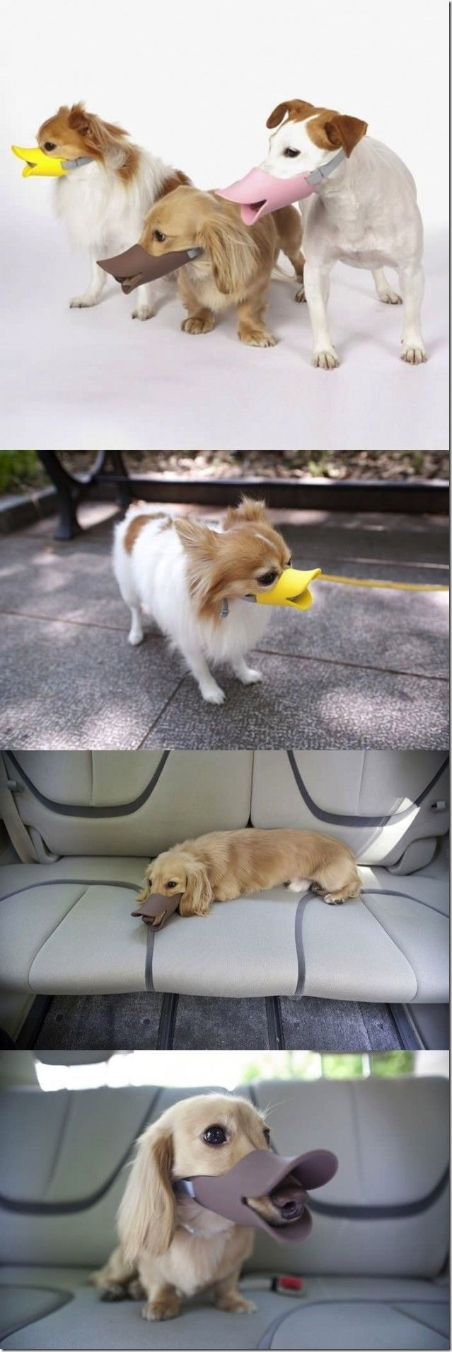 アヒル口の犬